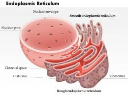 0614 Endoplasmic Reticulum biology Medical Images For PowerPoint