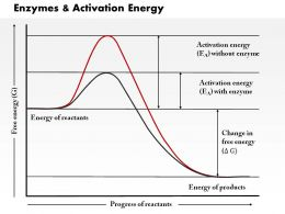 0614 Enzymes And Activation Energy Medical Images For Powerpoint