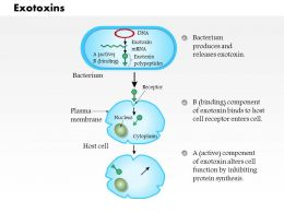 0614 Exotoxins Medical Images For PowerPoint