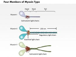 0614 Four Members Of The Myosin Type Medical Images For Powerpoint
