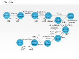 0614 Glycolysis Medical Images For PowerPoint