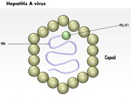 0614 Hepatitis A Virus Medical Images For Powerpoint