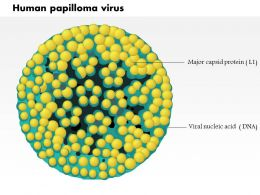 0614 Human Papilloma Virus Medical Images For Powerpoint