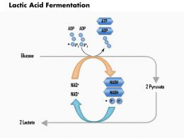 0614 Lactic Acid Fermentation Medical Images For Powerpoint