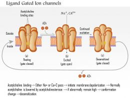 0614 Ligand Gated Ion Channels Medical Images For PowerPoint