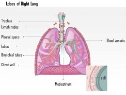 0614 Lobes Of Right Lung Medical Images For PowerPoint