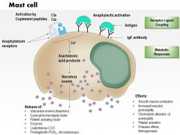 0614 Mast cell Immune System Medical Images For PowerPoint