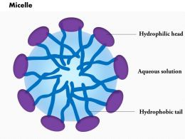 0614 Micelle biology Medical Images For PowerPoint