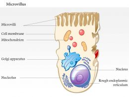 0614 Microvillus biology Medical Images For PowerPoint