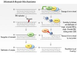0614 Mismatch Repair Mechanisms Medical Images For Powerpoint