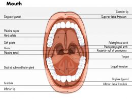 0614 Mouth Medical Images For PowerPoint