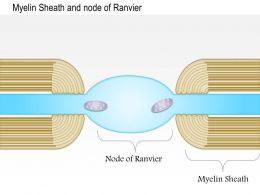 0614 Myelin Sheath And Node Of Ranvier Medical Images For Powerpoint