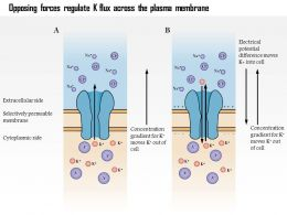 0614 Opposing Forces Regulate K Flux Across The Plasma Membrane Medical Images For Powerpoint