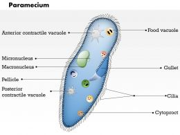 0614 Paramecium biology Medical Images For PowerPoint