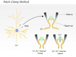 0614 Patch Clamp method Medical Images For PowerPoint