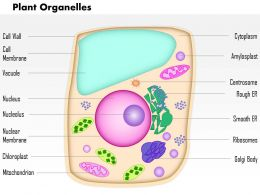 0614 Plant Organelles Medical Images For PowerPoint