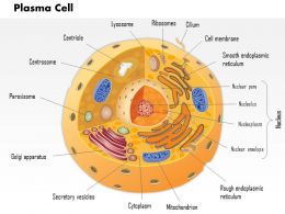 0614 Plasma cell Immune System Medical Images For PowerPoint