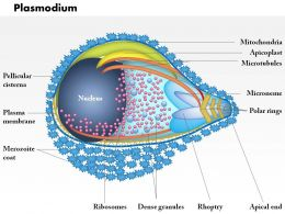 0614 Plasmodium Medical Images For PowerPoint