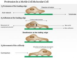 0614 Protrusion In A Motile Cell Medical Images For Powerpoint