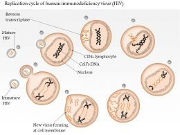 0614 Replication Cycle Of Human Immunodeficiency Virus Hiv Medical Images For Powerpoint
