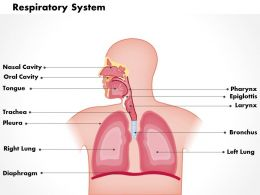 0614 respiratory system Medical Images For PowerPoint