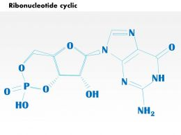 0614 Ribonucleotide cyclic cgmp biology Medical Images For PowerPoint