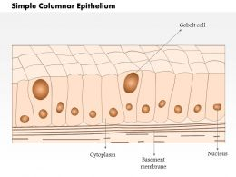 0614 Simple Columnar Epithelium Medical Images For Powerpoint