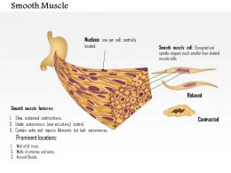 0614 Smooth Muscle Medical Images For Powerpoint