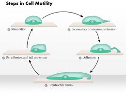 0614 Steps In Cell Motility Medical Images For Powerpoint