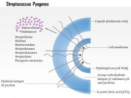 0614 Streptococcus Pyogenes Medical Images For Powerpoint