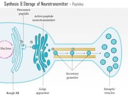 0614 Synthesis And Storage Of Neurotransmitter Peptides Medical Images For PowerPoint