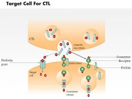 0614 Target cell for CTL Immune Medical Images For PowerPoint