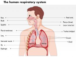 0614 The human respiratory system Medical Images For PowerPoint