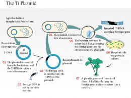 0614 The Ti Plasmid As A Vector In Plant Genetic Engineering Medical Images For Powerpoint