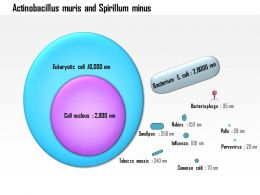 0714 Actinobacillus Muris And Spirillum Minus Medical Images For Powerpoint