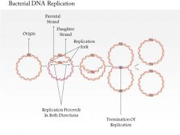 0714 Bacterial DNA Replication Medical Images For PowerPoint