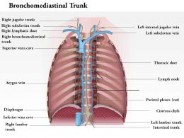 0714 Bronchomediastinal Trunk Medical Images For PowerPoint