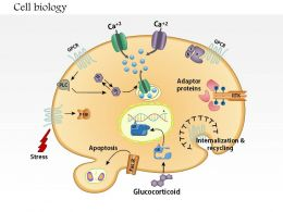 0714 cell biology Medical Images For PowerPoint