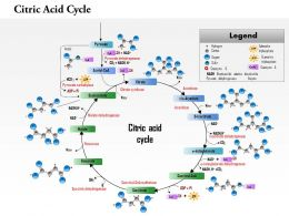 0714 Citric Acid Cycle Medical Images For PowerPoint