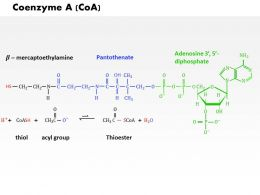 0714 Coenzyme Medical Images For PowerPoint