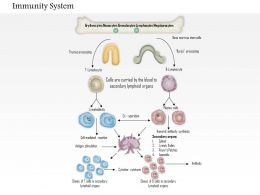 0714 Immunity System Medical Images For PowerPoint