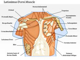 0714 Latissimus Dorsi Muscle Medical Images For PowerPoint