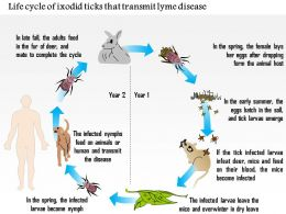 0714 Life Cycle Of Ixodid Ticks That Transmit Lyme Disease Medical Images For Powerpoint