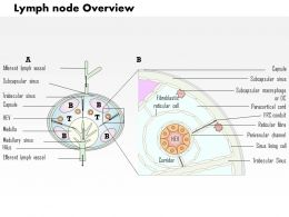 0714 Lymph Node Overview Medical Images For PowerPoint