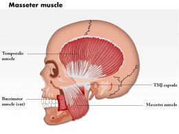 0714 Masseter Muscle Medical Images For PowerPoint