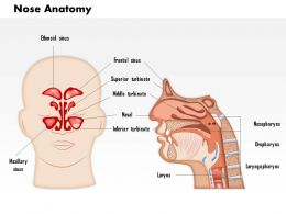 0714 Nose Anatomy Medical Images For Powerpoint