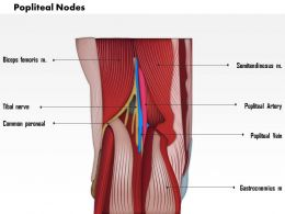 0714 Popliteal Nodes Medical Images For PowerPoint