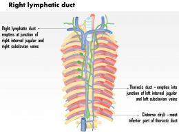 0714 Right Lymphatic Duct Medical Images For PowerPoint
