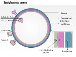 0714 Staphylococcus Aureus Medical Images For Powerpoint