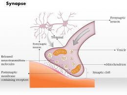 0714 Synapse Medical Images For Powerpoint
